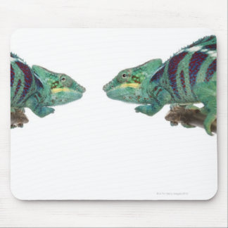 Two Panther Chameleons Nosy Be (Furcifer) Mouse Pad
