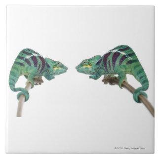 Two Panther Chameleons Nosy Be (Furcifer) Ceramic Tile