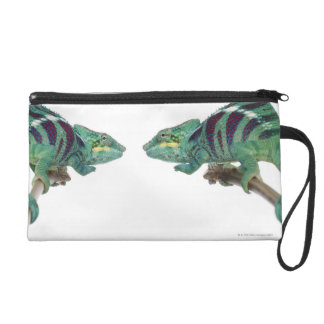 Two Panther Chameleons Nosy Be (Furcifer) Wristlet