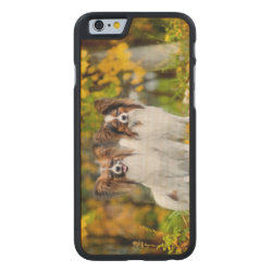 Carved ® iPhone 6 Bumper Wood Case with Papillon Phone Cases design