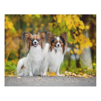 Two Papillon dogs in autumn Panel Wall Art