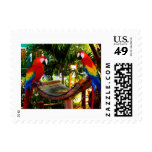 Two parrots stamp