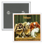 Two Pekingese Dogs Pinback Button