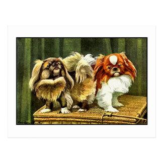 Two Pekingese Dogs Postcard