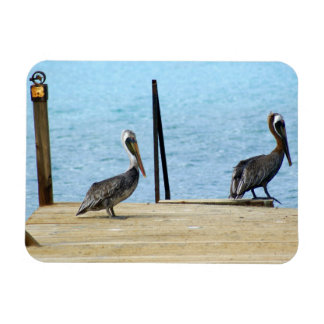 Two pelicans on the pier, Curacao Caribbean, Photo Magnet