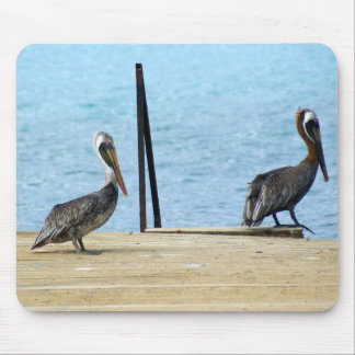 Two pelicans on the pier, Curacao Caribbean, Photo Mouse Pad