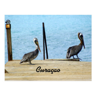 Two pelicans on the pier, Curacao Caribbean, Photo Postcard