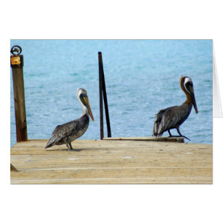 Two pelicans on the pier, Curacao, Greeting Card