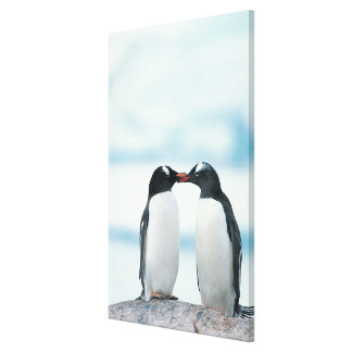 Two Penguins touching beaks Canvas Print