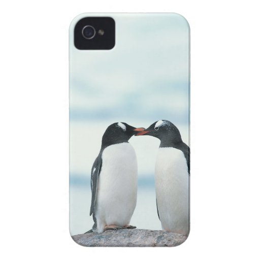 Two Penguins touching beaks iPhone 4 Case-Mate Cases
