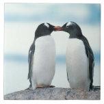 Two Penguins touching beaks Ceramic Tiles