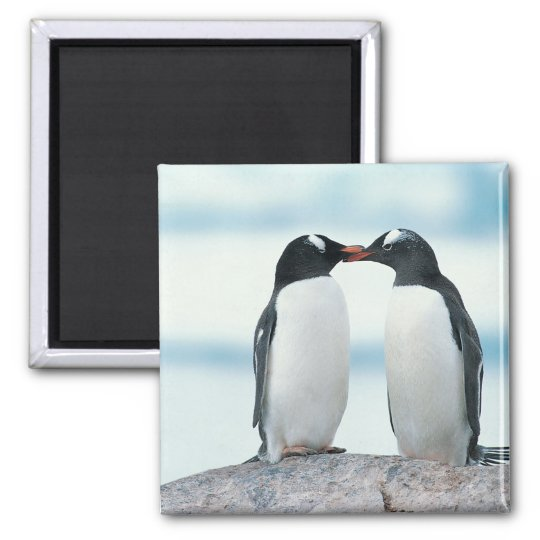 Two Penguins touching beaks Magnet