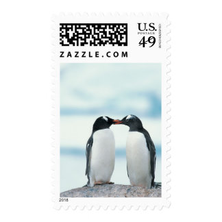 Two Penguins touching beaks Postage Stamp