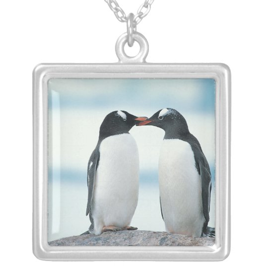 Two Penguins touching beaks Silver Plated Necklace