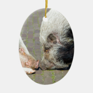 Two pigs making contact ceramic ornament
