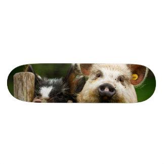 Two pigs - pig farm - pork farms skateboard