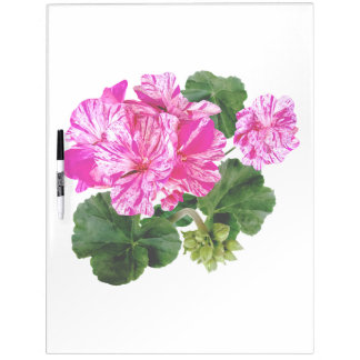 Two Pink and White Striped Geraniums Dry-Erase Board
