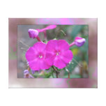 two pink canvas print