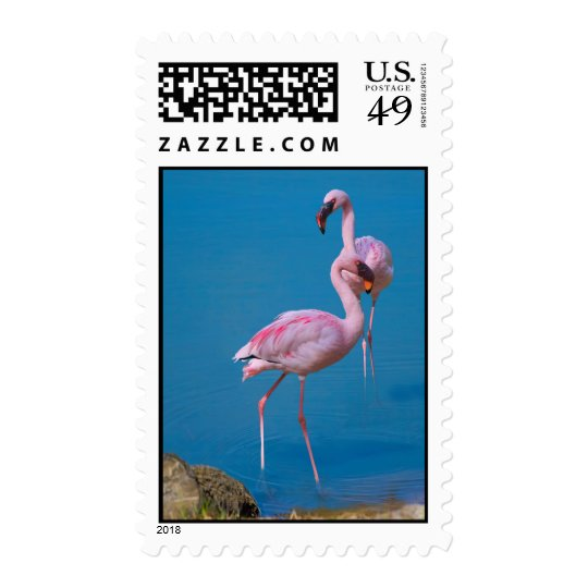 Two Pink Flamingos in the Water Postage