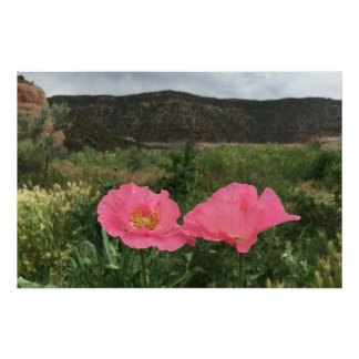 Two Pink Poppies Poster