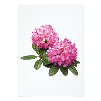 Two Pink Rhododendrons Card