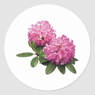 Two Pink Rhododendrons Classic Round Sticker
