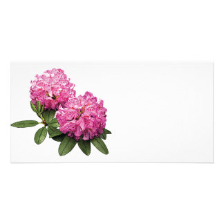 Two Pink Rhododendrons Photo Card