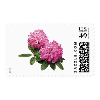 Two Pink Rhododendrons Postage