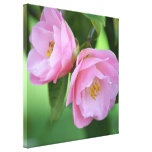 Two Pink Roses in Spring Stretched Canvas Print