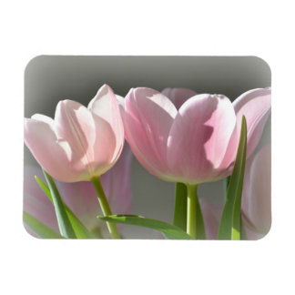 Two Pink Tulips Magnet