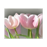Two Pink Tulips Stretched Canvas Print