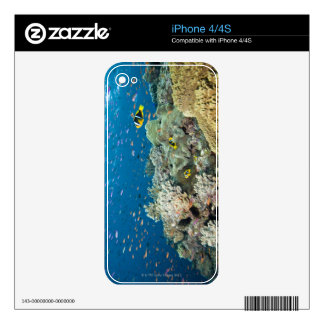 Two pinnacles starting in about 75 feet of water iPhone 4 decal