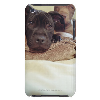 Two pit bull terriers sitting indoors, close-up barely there iPod cover
