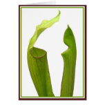 Two Pitcher Plants Greeting Card
