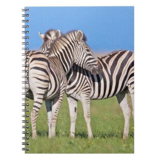 Two Plains zebra (Equus quagga) on coastal Spiral Notebook