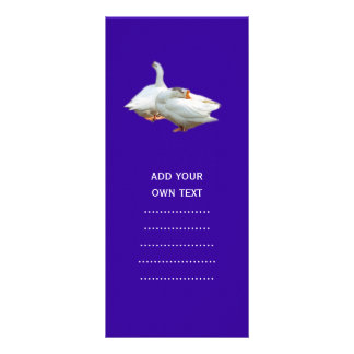 two playful happy geese in color background rack card