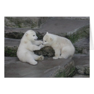 Two Polar bear cubs Card