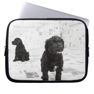 Two Portuguese Water Dog puppies in a room Computer Sleeve