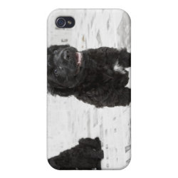 Case Savvy iPhone 4 Matte Finish Case with Portuguese Water Dog Phone Cases design