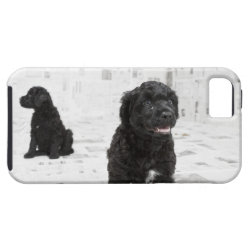 Case-Mate Vibe iPhone 5 Case with Portuguese Water Dog Phone Cases design