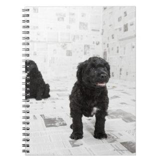 Two Portuguese Water Dog puppies in a room Spiral Notebook