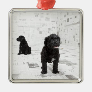 Two Portuguese Water Dog puppies in a room Square Metal Christmas Ornament