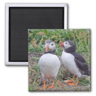 Two Puffins from Skomer Island Fridge Magnet