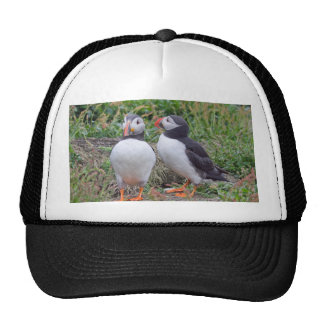 Two Puffins from Skomer Island Hat