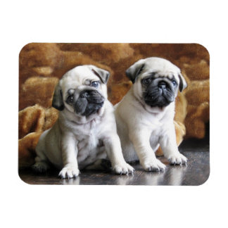 Two Pugs Magnet