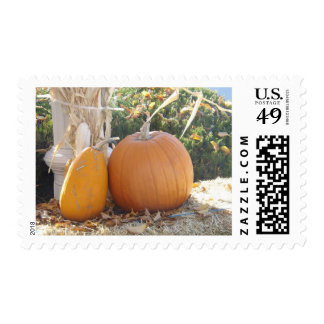 Two Pumpkins Postage Stamps