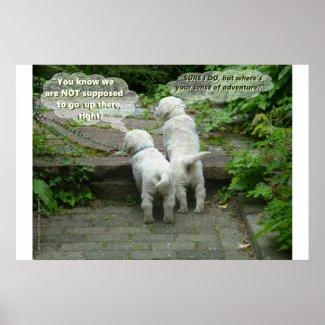 Two Puppies' Mischievous Adventure