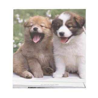 Two puppies sitting together memo note pad