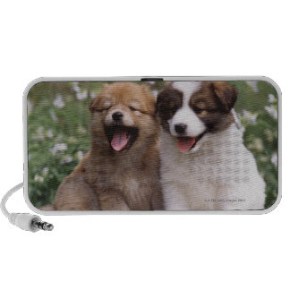 Two puppies sitting together notebook speaker