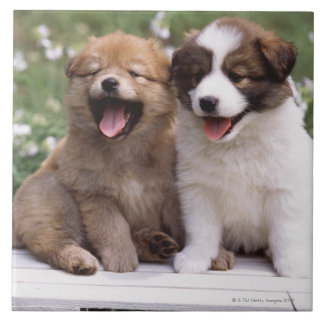 Two puppies sitting together large square tile